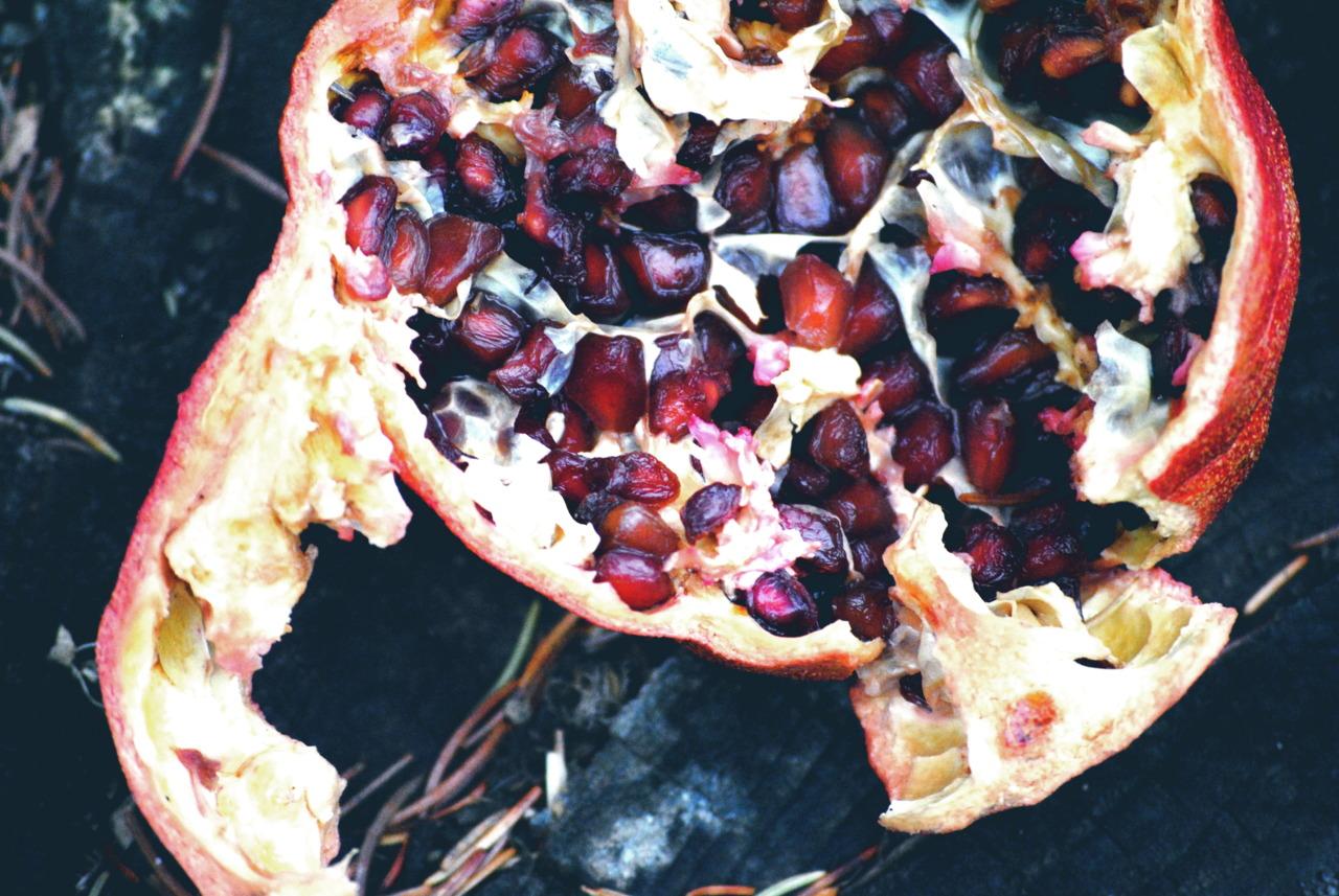Pomegranate. Cortona, Italy.