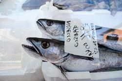 Fish. Camucia, Italy.