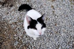 Cat, 2012.
