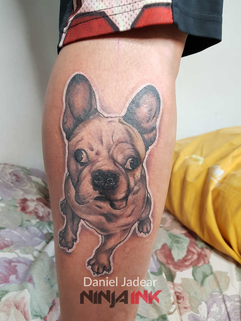 Daniel Jadear French Bulldog