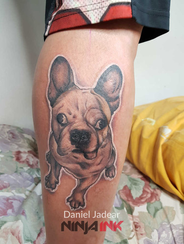Daniel Jadear French Bulldog