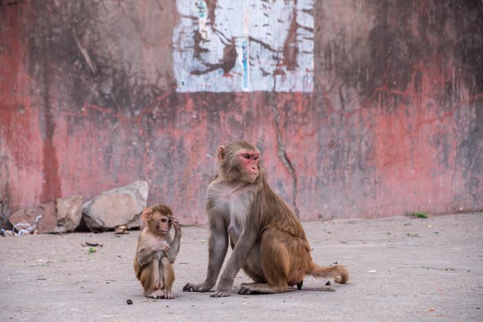 Road to Jaipur