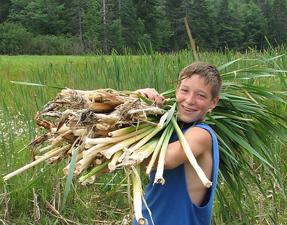 A boy gathers cattail reeds for camp activities