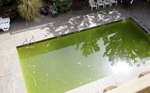Don't overdo the Chemicals if your pool turns green