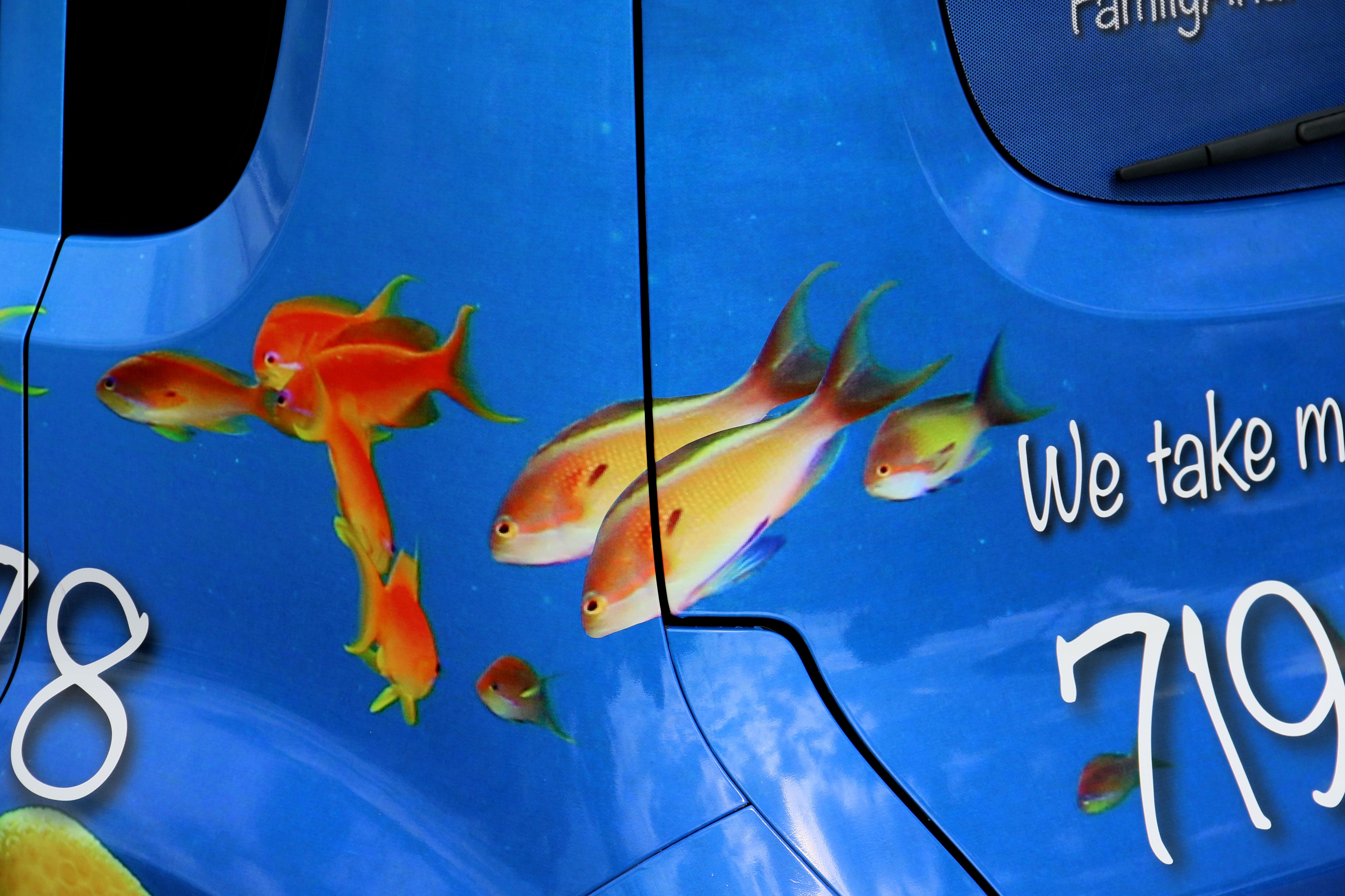 BackFish