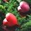 Thumbnail: I Heart You