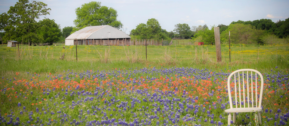 Bluebonnet family session- A Texas tradition.