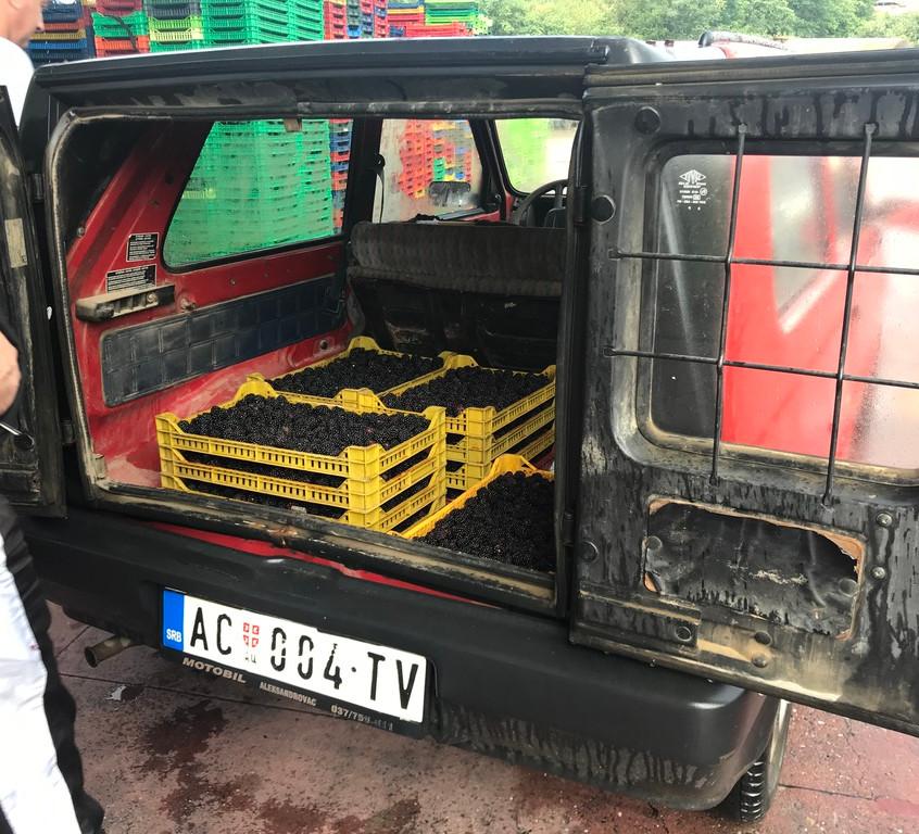 farmers supplying blackberries