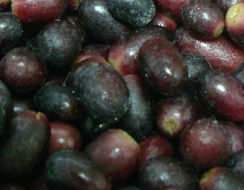 Grapes ex Chile