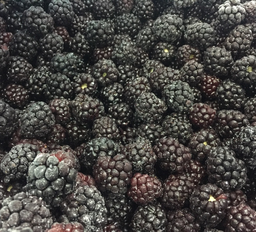 Cultivated Blackberries ex Chile