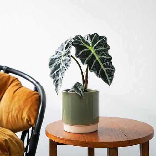 Eno Pot Sage Green- Fits 12cm Plants