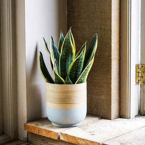 Bamboo Planter - Grey