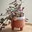 Thumbnail: Terracotta Dip Pot - Small