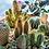 Thumbnail: Cactus Garden Workshop - 11th November @Hideout, Wigan
