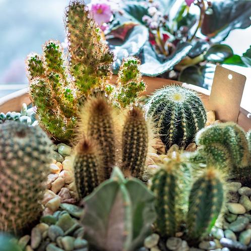 Cactus Garden Workshop - 11th November @Hideout, Wigan