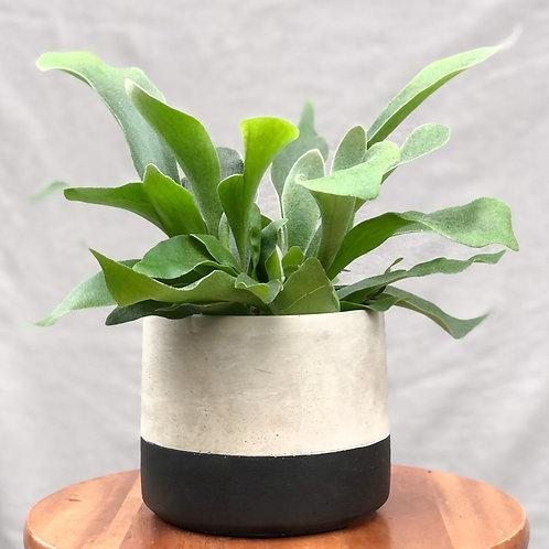 Black Dip Cement Planter - Fits 12cm Plants