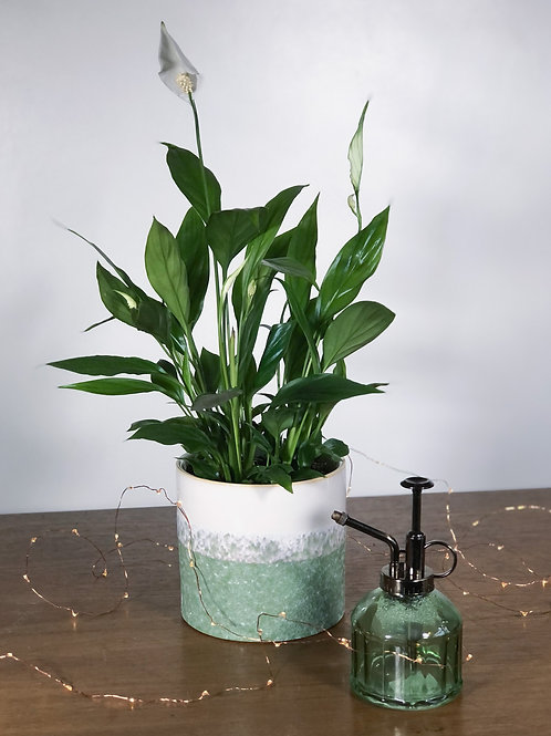 Peace Lily Gift with Ceramic Pot and Mister