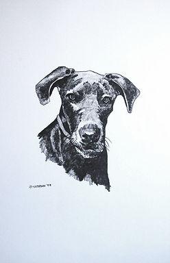 pet portrait, graphite