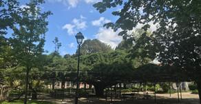 O Cipreste do Jardim do Príncipe Real