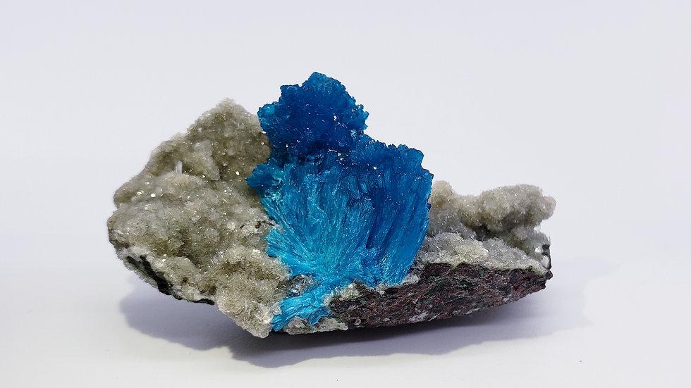 Vivid Sapphire-Blue Cavansite on Stilbite Matrix from Wagholi Quarry, India