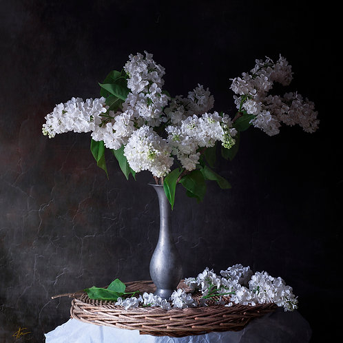 "Nature morte""LILAS BLANC"""