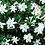 Thumbnail: Gardenia Soy Wax Melts