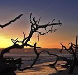 Driftwood Island.PNG