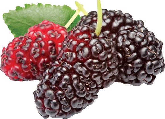 Mulberry Madness 6 pk. Wax Melts