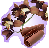 Chocolate Orchid.PNG