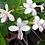 Thumbnail: Wild Jasmine Soy Candle