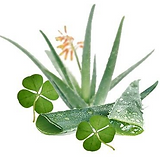 Ale & Green Clover.PNG