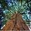 Thumbnail: Cedar Soy Candle