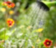 arrosage des fleurs jardin été  services à la personne Tremplin 95 domont solidaire