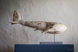 Whanopus-Original in Marble Plaster