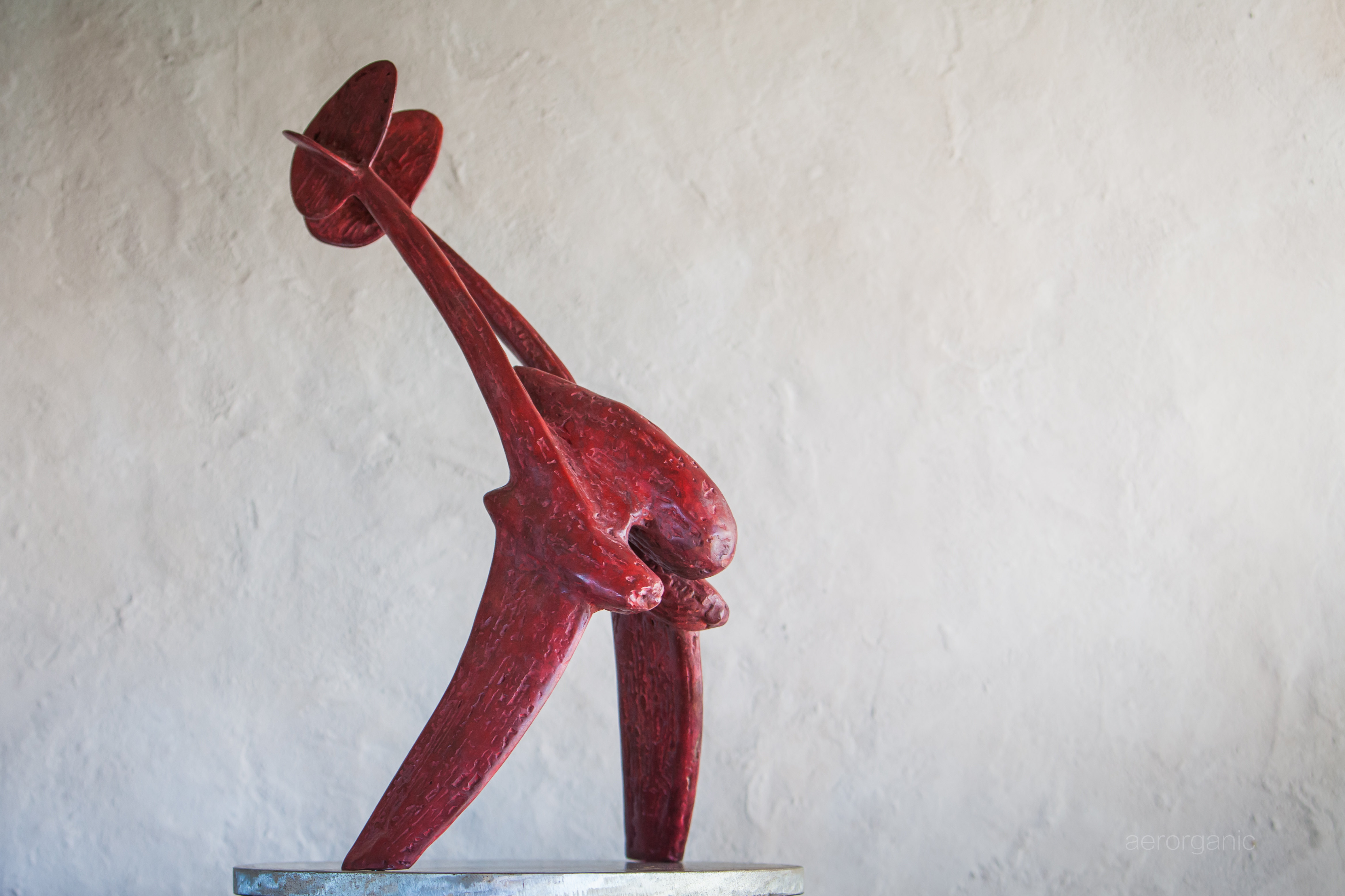 Fork Tailed Devil - Bronze -1 h