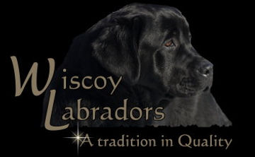 Wiscoy Labradors,Breeding Quality Labradors in NY State