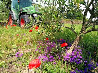 La biodiversité de la flore