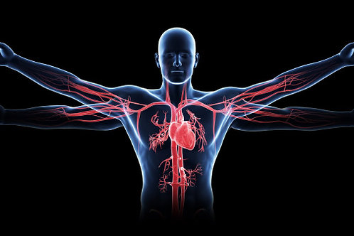 Anatomy and Physiology Diploma - Home study course