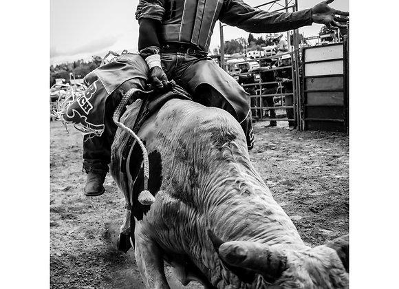 Jim Shepka - Cowboy 12