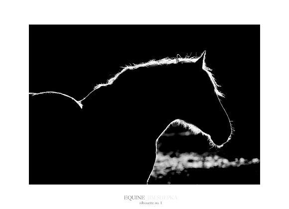 New Mexico - Equine #1