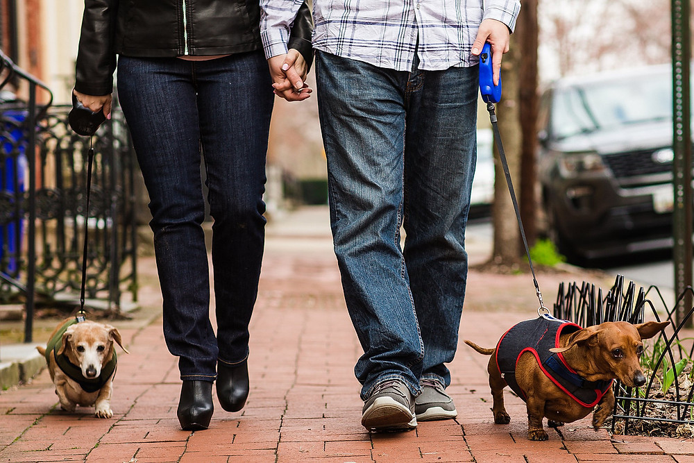 downtown frederick maryland engagement photography dachshund