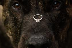 engagement session dog ring on nose frederick md