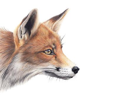 'Mr Fox'