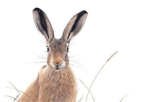 'Mr Hare'