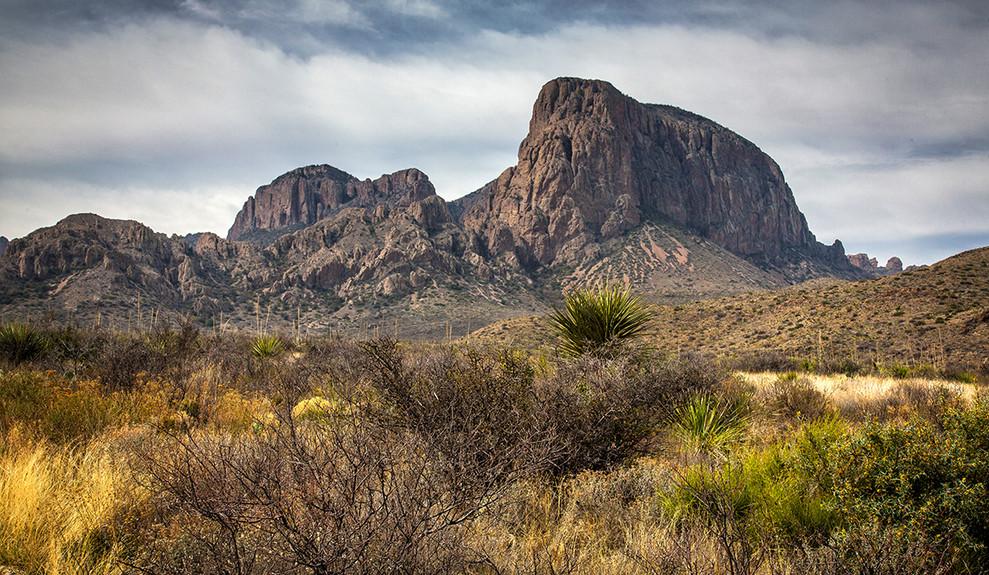 DESERT & SWAMP: TEXAS LANDSCAPES