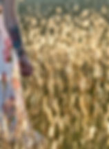 field Len Testa 2.jpg