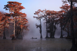 Caddo lake 17-11-7 (1 of 1)-64 (1)