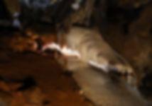 28-PETAR 2.jpg