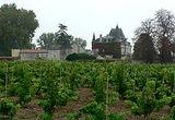 chateau vignes cissac
