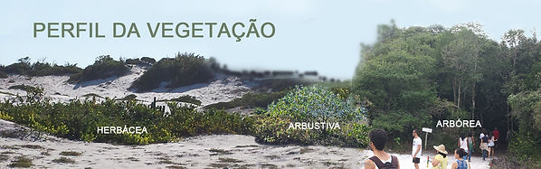 perfil_da_vegetação.jpg